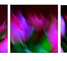 Abstract Flowers in 3 by Andrew Chambers