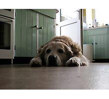 dog disguise II Photographic Print