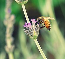 The Bee's Knees. by LianaNicole