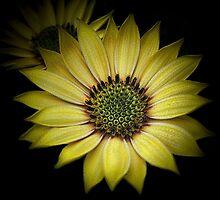 Glowing in the dark by EbyArts