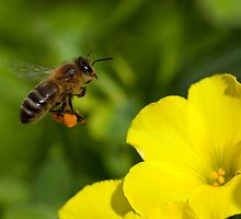 To 'Bee' at Work by Fiona Boundy