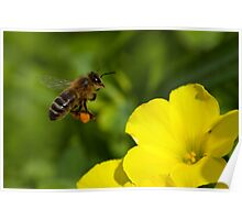 To 'Bee' at Work Poster