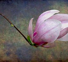 New Beginnings by Wendi Donaldson