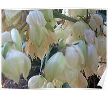 Still Blooming White Blossoms Poster