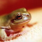 Dream Frog No.5 by Marc Cram