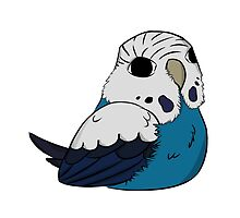 Budgie (white/blue) by parrotproducts