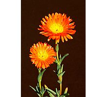 Floral duo Photographic Print