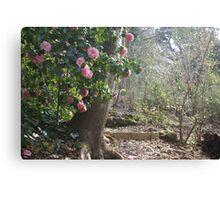 delectable view, Dandenong Ranges Canvas Print
