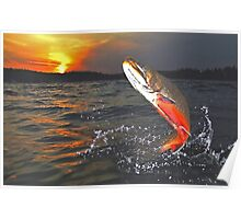 """Windfall"" Heritage Strain Brook Trout Poster"