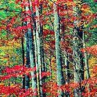 MAPLE TREES,AUTUMN by Chuck Wickham