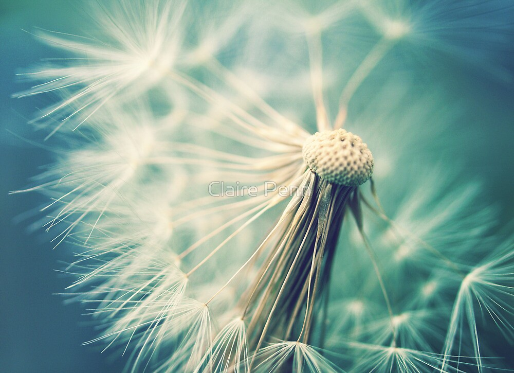 Not sure when you stop thinking dandelions are beautiful... by Claire Penn