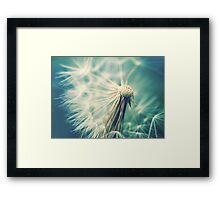 Not sure when you stop thinking dandelions are beautiful... Framed Print