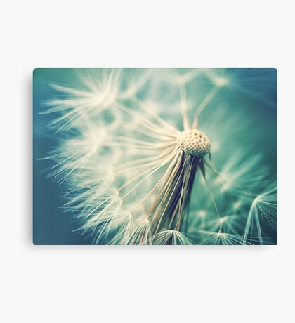Not sure when you stop thinking dandelions are beautiful... Canvas Print