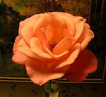 Peach Rose by Irene Garjian