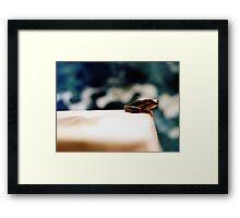 Frog disgust Framed Print