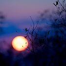 Sunset Over Kruger National Park by Damienne Bingham