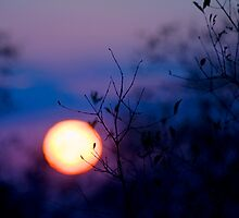 Sunset Over Kruger National Park by Damienne Bingham