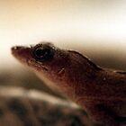Lizard Lust by Marc Cram