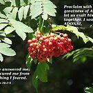 Psalms 34 v 3-4 in berries by Dawnsuzanne