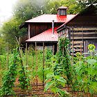 Backyard Garden by Jeanne Sheridan