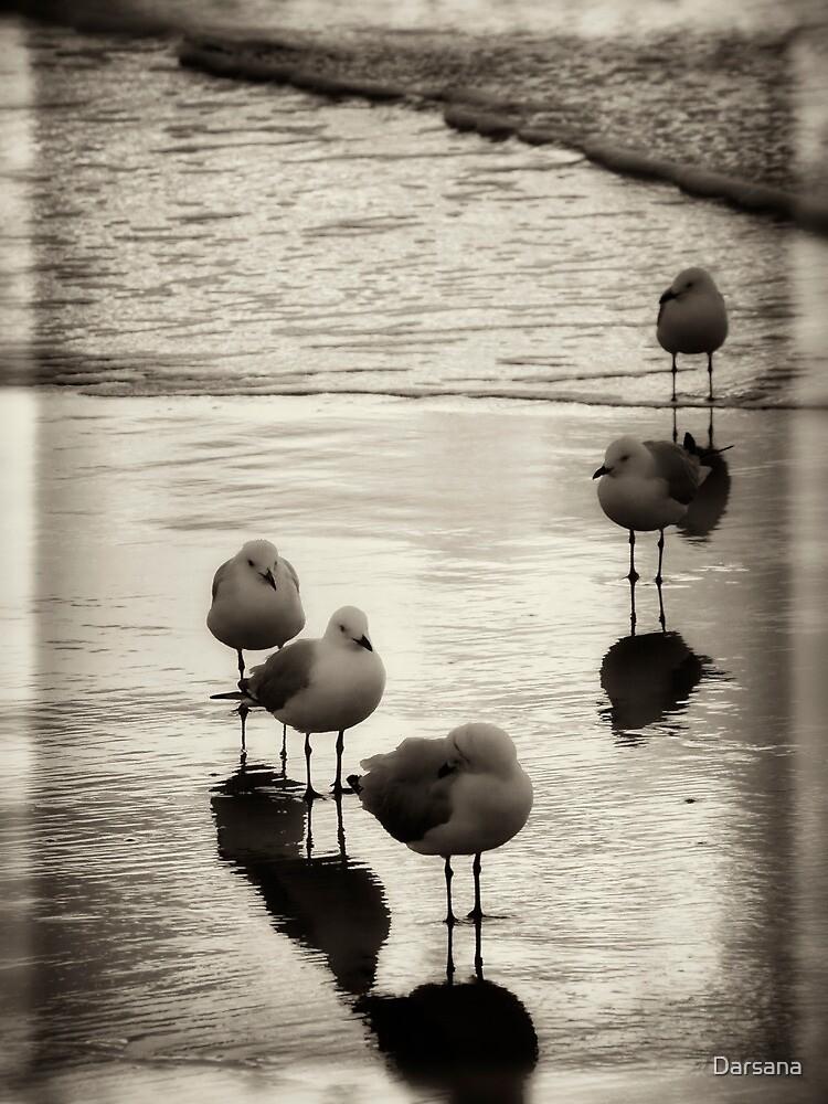 Silver Gulls on the beach by Tony Steinberg