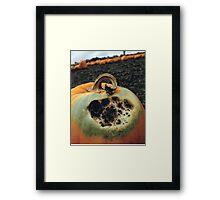 Rotting Halloween Pumpkin Framed Print