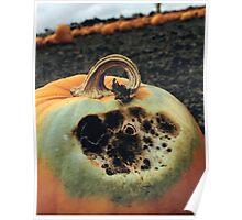 Rotting Halloween Pumpkin Poster