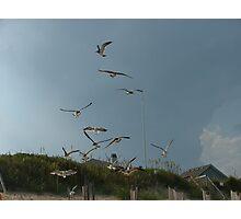 Flock of Gulls Photographic Print