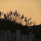 Sunset Dunes by Lesley Rosenberg