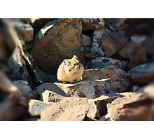 Pika-chu? Photographic Print