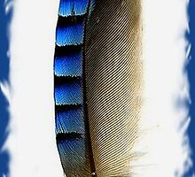 Eurasian Jay Feather by taiche