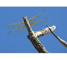 Dragonfly & Seek Photographic Print