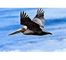 Brown Pelican in Flight Photographic Print