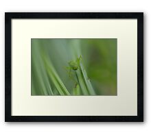 green on green grass Framed Print
