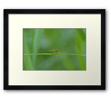 bee on grass - diptère qui prend la pose Framed Print