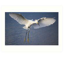 Beautiful Snowy Egret Art Print