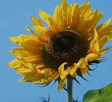 Let the sun shine through by ElsT