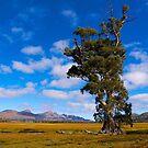 Cazneaux Tree, Wilpena, Flinders Ranges, SA. (Study 10) by johnrf