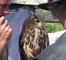 Beautiful owl by Anita57