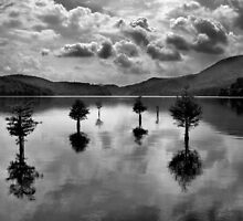 Ocoee Trees by Marylee Pope