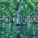 Flooded Walnut Orchard by Buckwhite