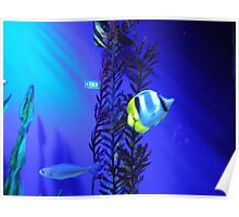 Aquarium - Seaweed & Fish - Photo Poster