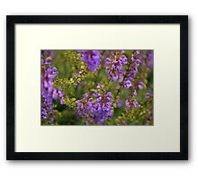 A bevvy of wild woodland beauties. Framed Print
