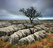 Yorkshire: Wuthering Heights by Angie Latham