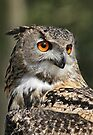 Owl in the Forest by Val Saxby