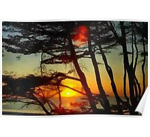 Sun setting through the trees Poster