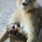 Barbary Macaque with baby by DutchLumix