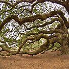 The Angel Oak by Kent Burton