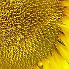 Sunflower by Annabella