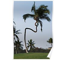 hawaiian crooked palm tree Poster
